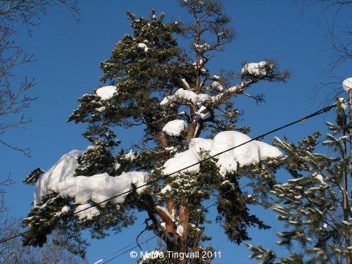 Tall mot vinterhimmel