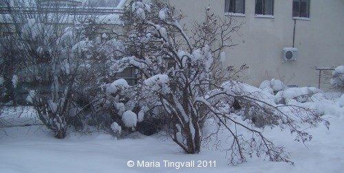 Vintern håller greppet