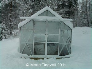 Växthus i vinterdvala.