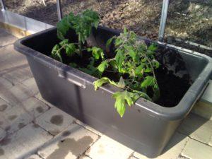Tomater i murbruksbalja