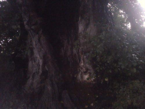 Geocache: Unter die ulme